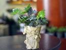 Mẹo hay: 5 phút để có chậu hoa đẹp trên góc bàn