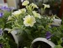 Làm sao để chọn hoa tươi được lâu trong ngày Tết?