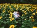 Những cánh đồng hoa hút giới trẻ Sài thành
