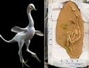 Phát hiện loài khủng long không chỉ chạy và bay trên mặt đất mà còn... biết bơi