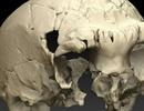 Phát hiện xương sọ bí ẩn 400.000 năm tuổi tại Bồ Đào Nha
