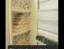 Không thể tin nổi: Người phụ nữ vắt được 6 lít sữa mỗi ngày