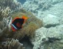 Thú vị lặn biển ngắm san hô ở Cù Lao Chàm