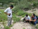 Lập khu bảo tồn rùa biển ở Cù Lao Chàm