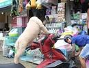 Rọ mõm chó đắt hàng trước quy định xử phạt mới