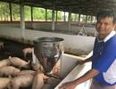 Giá thịt lợn vẫn cao mặc dù thuộc hàng đang... giải cứu