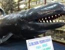 """Cận cảnh các loại cá có hình thù """"kỳ dị"""" trong thế giới đại dương"""