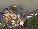 Hồ cấp nước sạch cho Đà Lạt tràn ngập rác thải