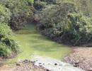 Hàng nghìn hộ dân khiếp đảm vì hồ chứa 13 triệu m3 nước bị ô nhiễm