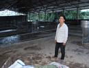 Người phụ nữ chôn chân nhìn hơn 200 con heo bị nước lũ cuốn