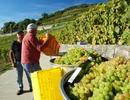 Đến thăm 10 vùng đất có rượu vang ngon nhất thế giới