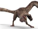 100 triệu năm trước, khủng long đã biến thành chim như thế nào?
