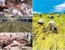 Xuất khẩu nông lâm và thủy sản 8 tháng đạt gần 24 tỷ USD
