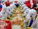 Lo gà bệnh từ Trung Quốc tràn vào Việt Nam