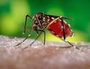 """""""Quái vật nhỏ bé"""" mang nhiều bệnh dịch có thể xâm chiếm 75% nước Mỹ"""