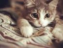 Thế giới trông như thế nào trong đôi mắt của loài mèo?