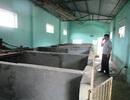 Thanh Hóa: Nhiều cơ sở giết mổ tiền tỉ bỏ hoang