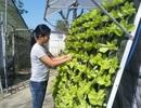 Độc đáo mô hình trồng rau sạch bằng hệ thống vườn treo