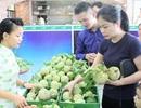 """Na """"khủng"""" Lạng Sơn giá 120.000 đồng/kg bán tại Hà Nội"""