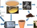 """Trung Quốc phát hiện loại nấm có khả năng """"tiêu hóa"""" nhựa dẻo"""