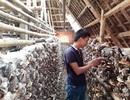 Chàng trai 8X trở thành triệu phú nhờ trồng nấm linh chi đỏ