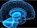"""Thiếu ngủ có thể khiến não """"tự ăn"""" chính nó"""