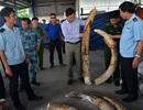 Cán bộ hải quan đánh tráo ngà voi, Phó Thủ tướng yêu cầu điều tra