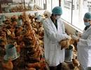 Phối hợp với quốc tế để ngăn nguy cơ vi rút cúm A/H7N9 vào Việt Nam