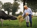 Hỗ trợ nông dân kỹ thuật chăn nuôi bò sữa từ Hà Lan