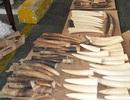 Hơn 47 kg ngà voi gửi từ Đức về Việt Nam qua đường bưu điện