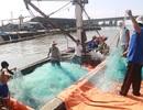 Hậu Formosa, ngư dân phấn khởi bước vào vụ đánh bắt đầu năm