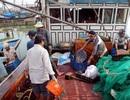 Ngư dân phấn khởi về bờ với những tàu đầy ắp cá cơm