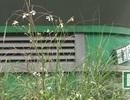 Hà Nội: Hàng loạt nhà vệ sinh công cộng bị bỏ không