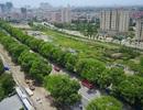 Những tuyến phố có hàng cây rợp bóng mát đẹp nhất Hà Nội