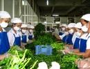 """TPHCM: """"Thay não"""" nền nông nghiệp theo hướng công nghệ cao"""