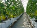 Hỗ trợ tối đa 10 tỷ đồng cho một dự án nông nghiệp công nghệ cao