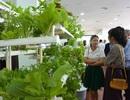 Đà Nẵng kêu gọi đầu tư 1.500 tỷ đồng vào 5 dự án nông nghiệp công nghệ cao