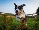 Những người nuôi chó vận động nhiều hơn và cũng sẽ được lợi ở nhiều mặt khác