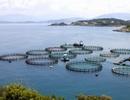 Chính phủ quy định việc cấp phép nuôi trồng thủy sản trên biển đối với nhà đầu tư nước ngoài