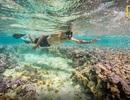 Ảnh Tổng thống Obama lặn biển ngắm san hô lần đầu được công bố