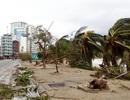 """Hàng cây chống bão ven biển Nha Trang """"đổ rạp"""" trước bão số 12"""