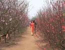 Lưu giữ khoảnh khắc xuân ở những vườn hoa nổi tiếng