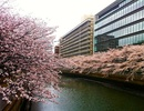 6 điểm tuyệt đẹp ngắm hoa anh đào ở Nhật Bản