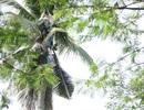 Lạ đời người đàn ông sống trên cây dừa suốt 3 năm không chịu xuống đất