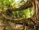 Đến thăm những khu rừng đẹp như thần tiên