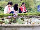 Hệ thống giáo dục chất lượng cao Nguyễn Bỉnh Khiêm