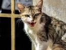 Sốc với chàng trai bị bất lực vì … mèo cào