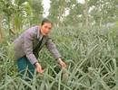 Người phụ nữ biến đất cằn thành trang trại tiền tỷ