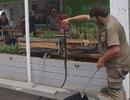 Suýt chết vì tưởng nhầm rắn độc là... đồ chơi trẻ em