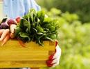 Những thực phẩm nào an toàn với trẻ?